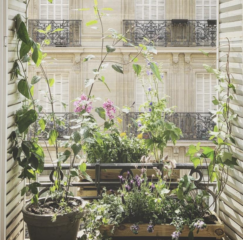 Les fenêtres champêtres (7è)