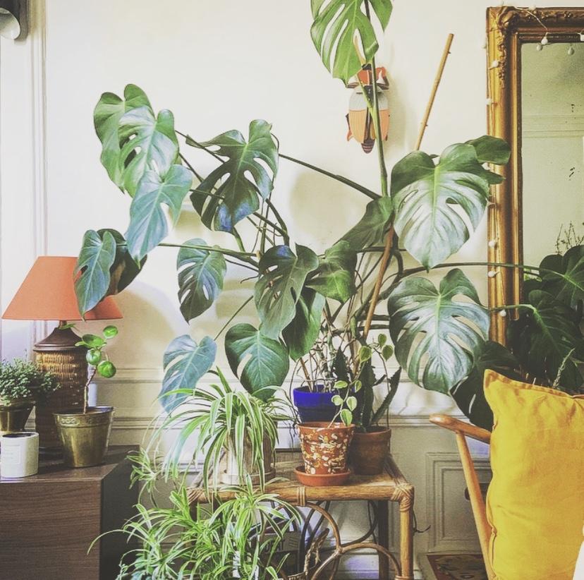 La jungle urbaine seventies