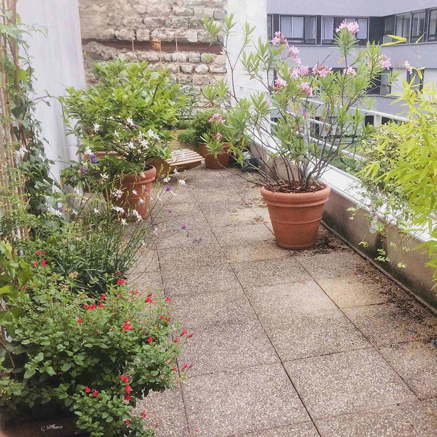Biodiversité sur la terrasse (11è)